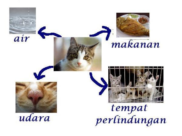 Keperluan Asas Haiwan