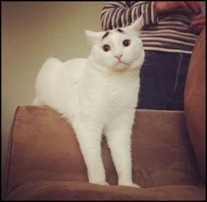 sam kucing dengan kening menggoda